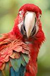 parrot-150px
