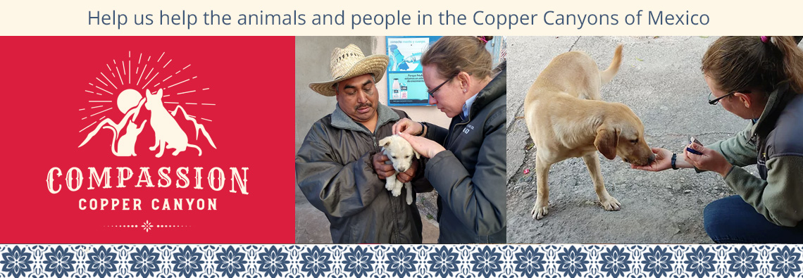Help Dr. Shannon and her team provide care to the animals in the Copper Canyons of Mexico